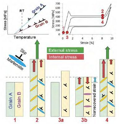 Bikrystalický model vývoje mikrostruktury